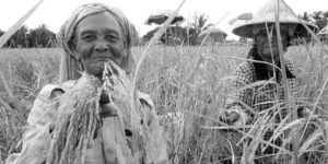 The Rice Soul- Myths, History and Folklore of RICE Beras or Nasi