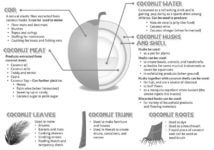 uses of coconut plant
