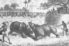 There be Unicorns- Myth & Folklore of the One-horned rhinoceros
